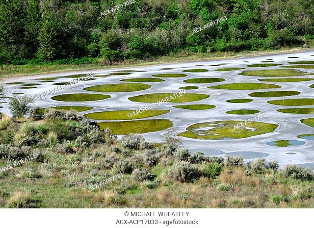 "Spotted lake, ""Ha Ki lil xw"", sacred medicine lake of the Okanagan People, near Osoyoos, British Columbia, Canada"