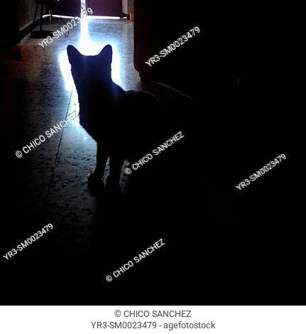 The silhouette of a cat in Prado del Rey, Sierra de Cadiz, Andalusia, Spain