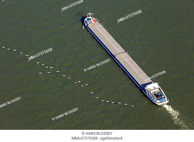 Aerial photo, cargo ship on the Rhine River with a flock of cranes during migration, inland shipping, Rhine, Duisburg-West, Duisburg, Ruhr area