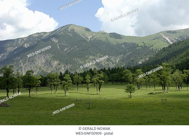 Austria, meadow with trees in mountain scenery