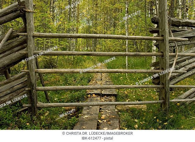 Reindeer fence and wooden boardwalk leading through birch forest in autumn, Tiiliikajaervi National Park, Finland, Europe