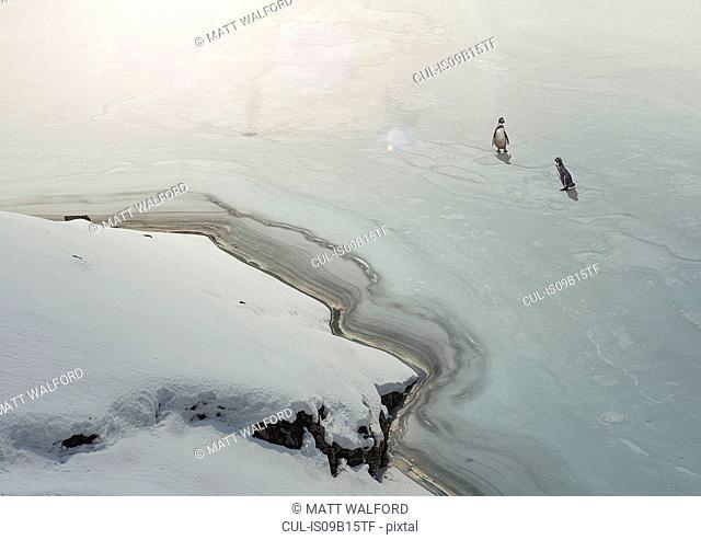 Penguins on frozen lake