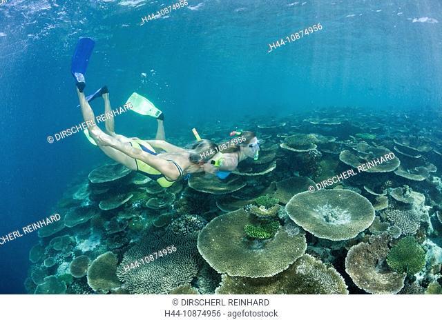 Frauen schnorcheln ueber Riff, Ellaidhoo Hausriff, Nord Ari Atoll, Malediven, Two Women snorkel over Reef, Ellaidhoo House Reef, North Ari Atoll, Maldives