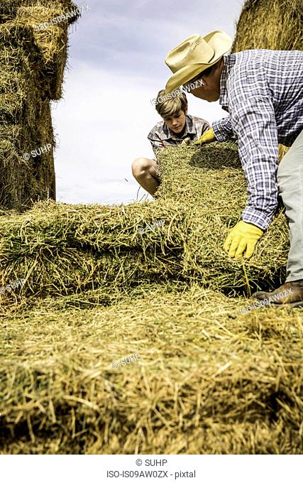 Mature man and boy moving hay bales
