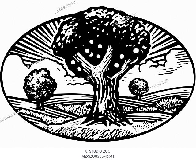 Oval shaped nature scene of apple tree in orchard, black and white