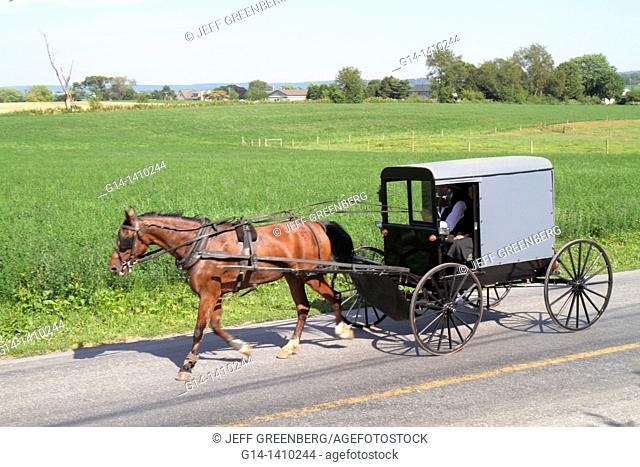 Pennsylvania, Intercourse, Dutch Country, country road, Amish community, draught, draft, horse, horse-drawn, buggy, wagon, heritage, tradition, old-fashioned