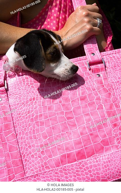 Woman walking with puppy in pink purse