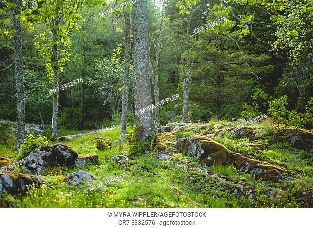 Biodiverse landscape