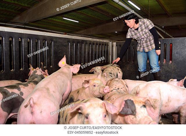 portrait of a farm woman on a pig farm