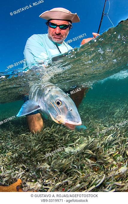 saltwater fly fishing Over/under off man hold a BIG BONEFISH underwater los roques venezuela