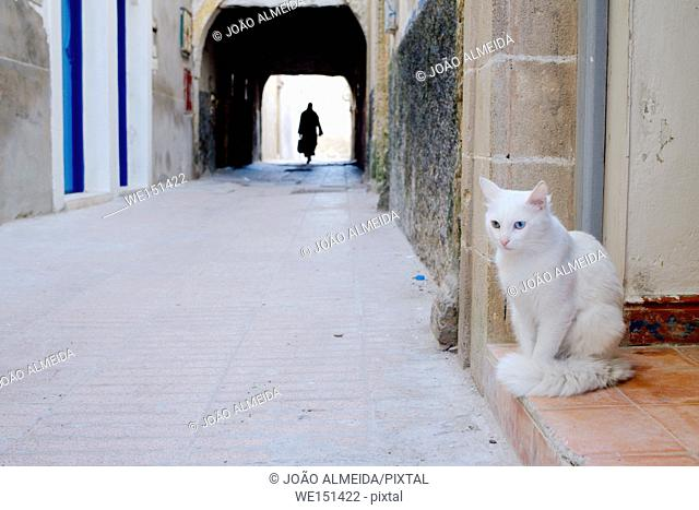 The cats on the alleys of Essaouira
