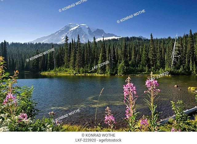 The idyllic Reflection Lake with Mount Rainier under blue sky, Mount Rainier Nationalpark, Washington, USA