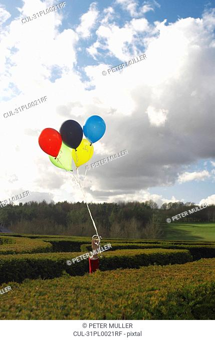 Hand holding balloons in a maze