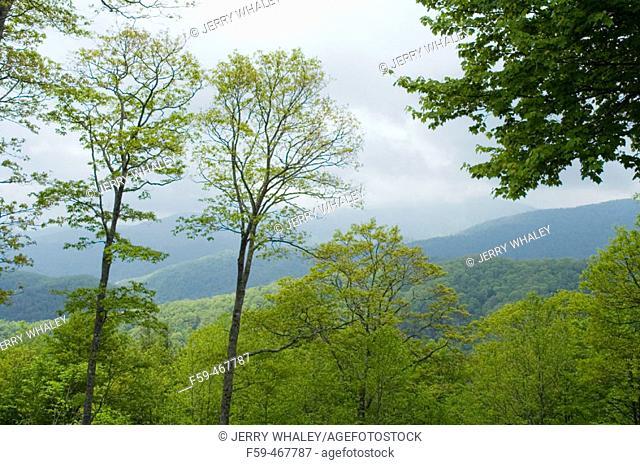 Spring Image from Newfound Gap Road, Great Smoky Mtns Nat. Park, North Carolina, USA