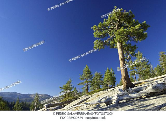 Landscape of trees and rock in Yosemite National Park, California, United States
