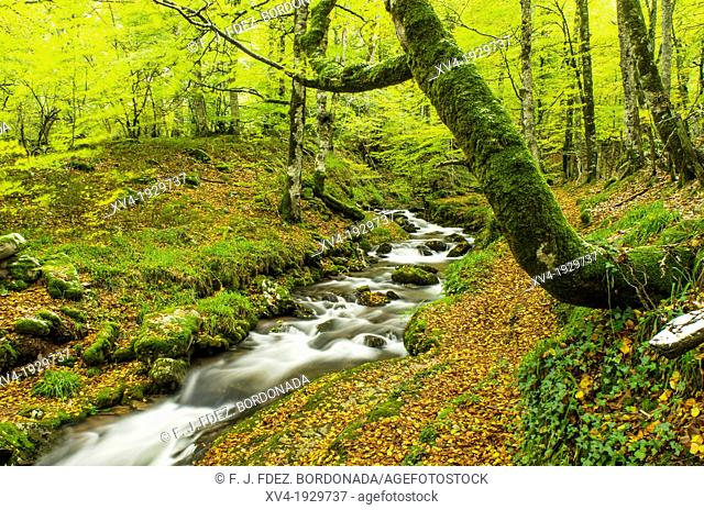 Riverside in autumn of Arce Valley forest, Navarre, Spain