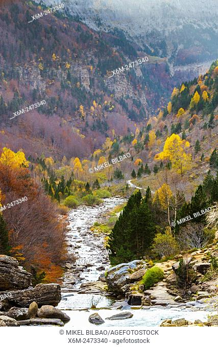 Arazas river and forest. Ordesa Valley. . Ordesa National Park. Pyrenees, Huesca, Spain, Europe