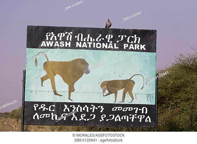 Africa, Ethiopia, Rift Valley, Awash, Sign announcing the presence of Baboon hamadryas or Hamadryas (Papio hamadryas), possibly along the road