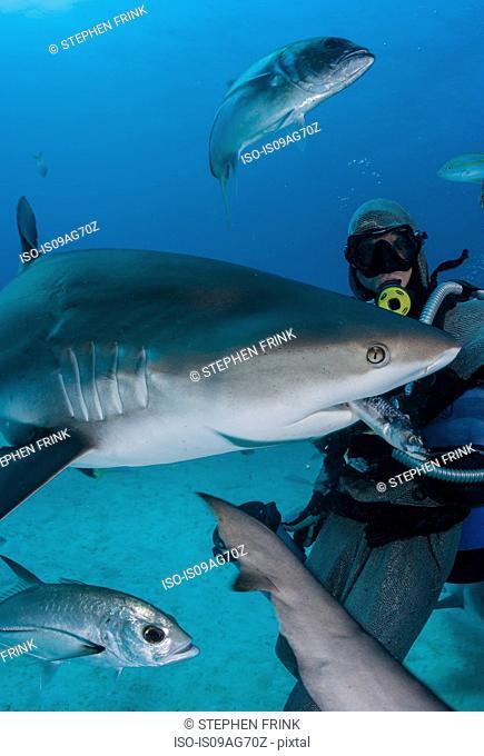 Shark feeder feeds shark