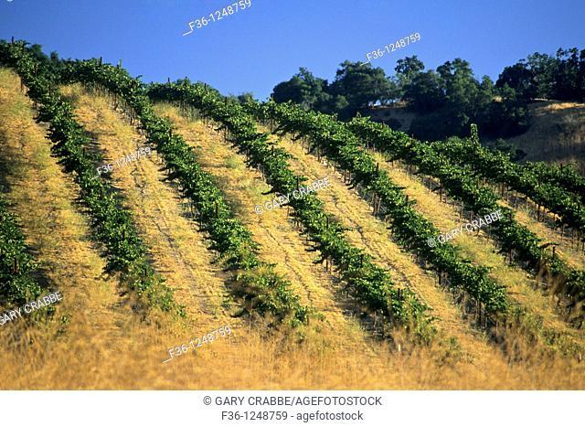 Tablas Creek Vineyards, Adelaida Road, Paso Robles, San Luis Obispo County, California