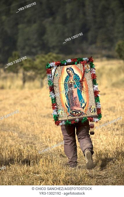A pilgrim carrying an image of the Virgin of Guadalupe walks through a field as he travels to reach the Basilica of Guadalupe in Mexico City, December 7