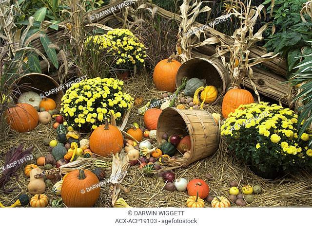 Halloween display, Niagara Parks Greenhouse, Niagara Falls, Ontario, Canada