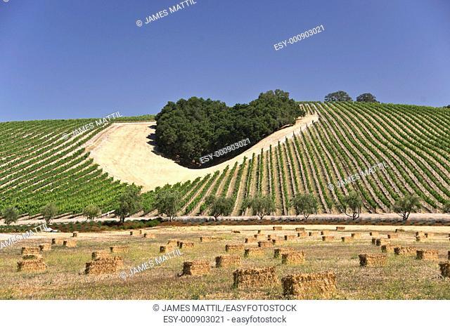 Heart-shaped cluster of oaks amid a California hillside vineyard