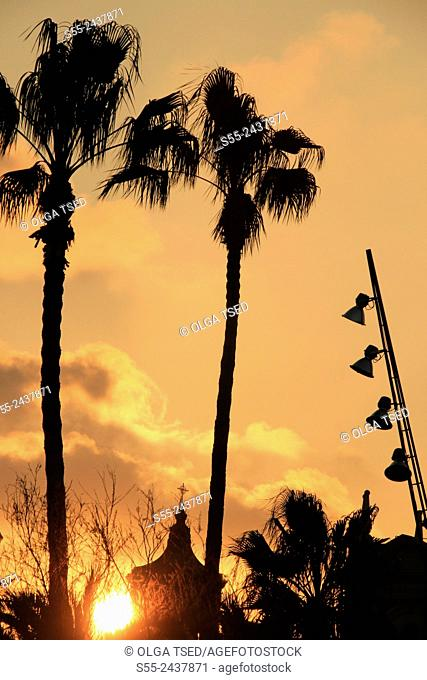 Palmtrees in the sunset. Maremagnum area, Port Vell, Barcelona, Catalonia, Spain