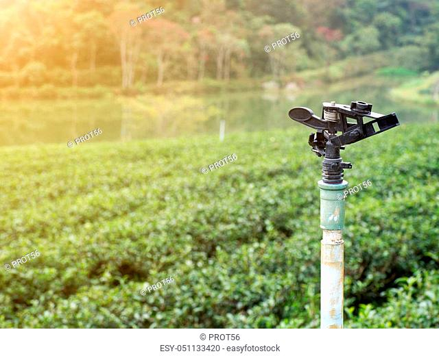 Springer Watering The background is a green tea Plantation