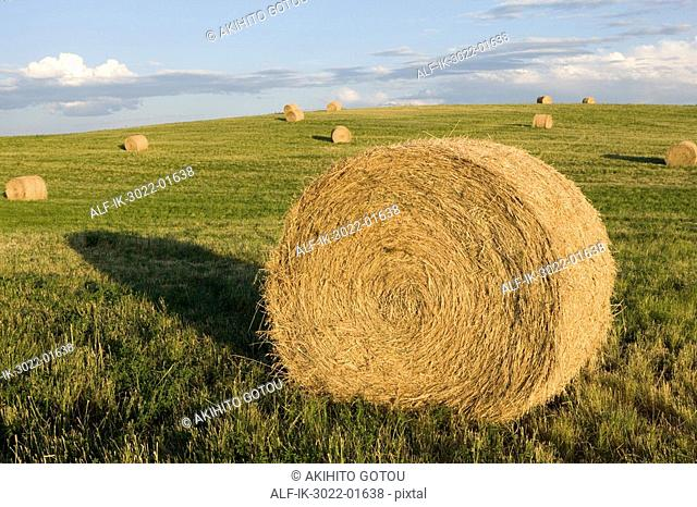 Dried harvest Stock Photos and Images | age fotostock