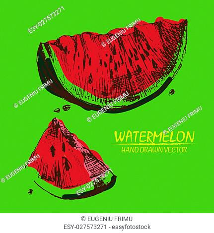 Digital vector detailed color watermelon hand drawn retro illustration collection set. Thin artistic linear pencil outline
