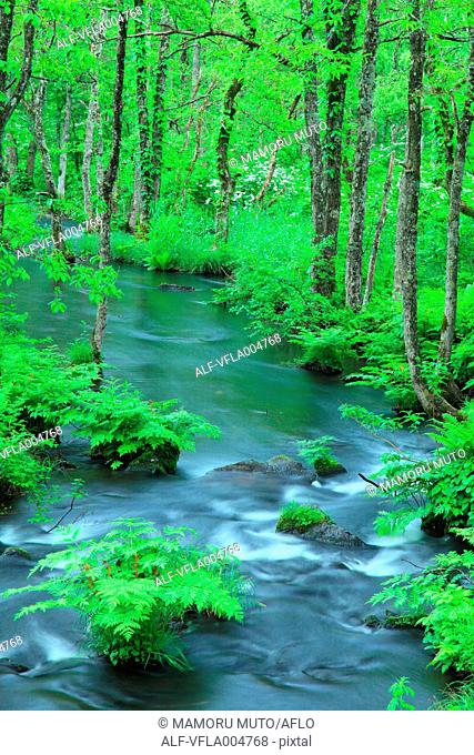 Water stream in the woods, Fukushima Prefecture, Japan