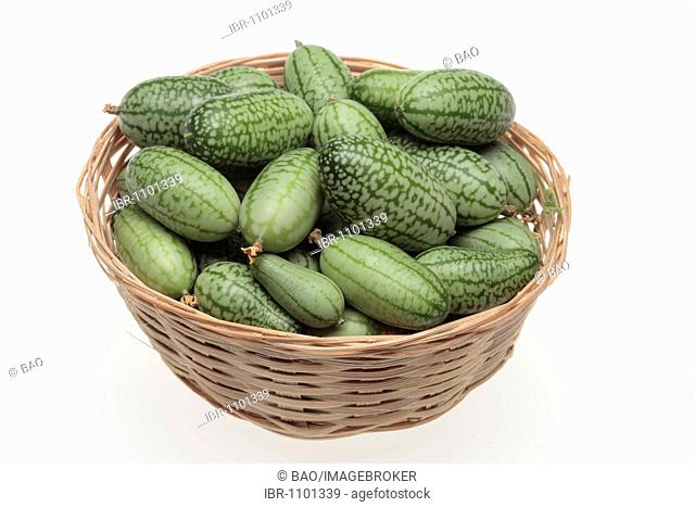 Mexican Sour Gherkin, Mexican Miniature Watermelon or Mouse Melon (Meliothria scabra), Vegetable