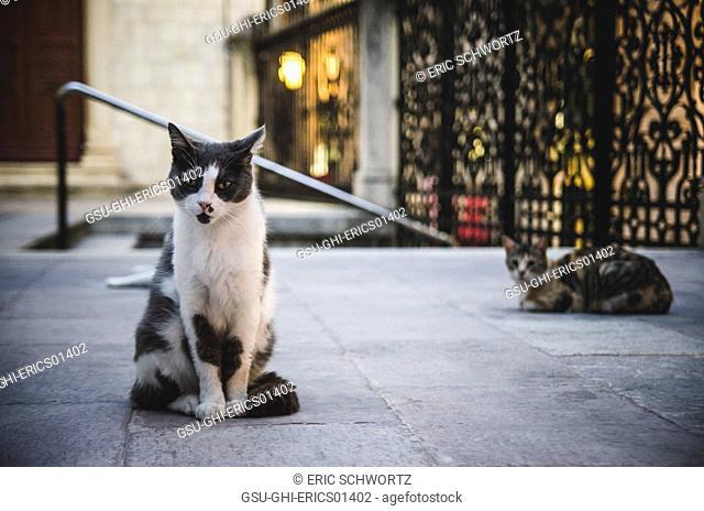 Stray Cats at Dusk, Dubrovnik, Croatia