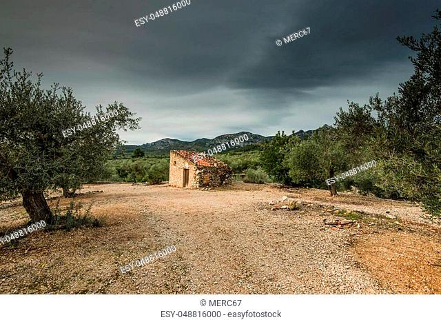 Rural dry stone house in olive tree orchand in Spain
