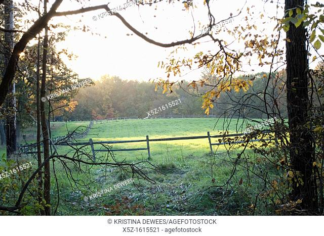 The afternoon sun on a fenced in pasture in the Fall