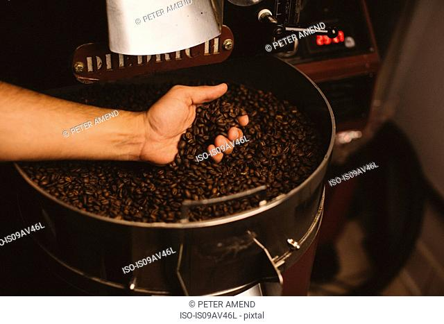 Man holding roasted coffee beans