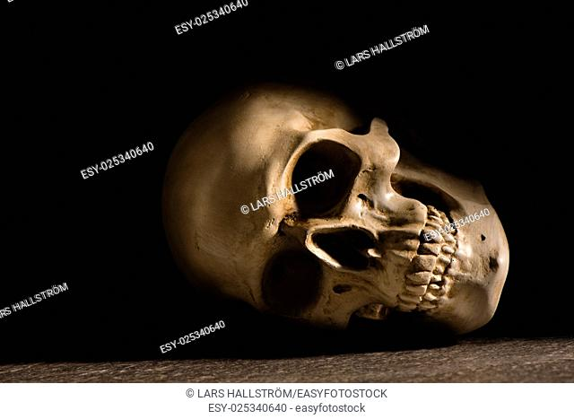 Human skull with dark background. Concept of death, horror and anatomy. Spooky halloween symbol