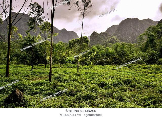 Rainforest on Cat Ba, the largest island in Halong Bay