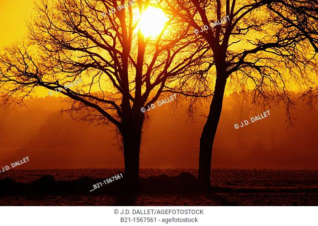 Winter sunrise near Beaupouyet, Dordogne, Aquitaine, France