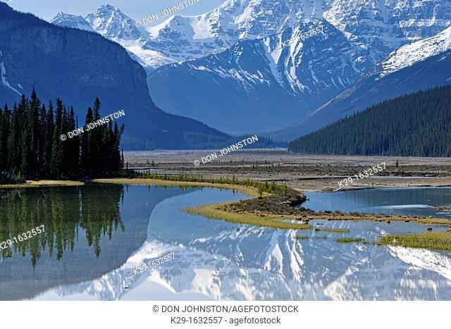 Mt  Kitchener reflected in the Beauty Creek pool near the Sunwapta River, Jasper NP, Alberta, Canada