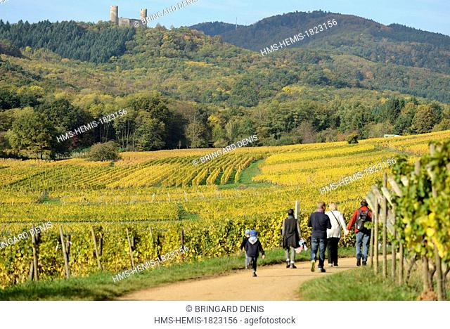 France, Bas Rhin, Alsace Wine Route, Mittelbergheim, labelled Les Plus Beaux Villages de France (The Most Beautiful Villages of France)