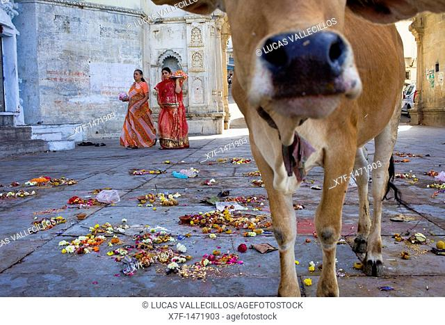 women with offerings and offerings on the floor, in Gangaur ghat,Pichola lake,Udaipur, Rajasthan, india