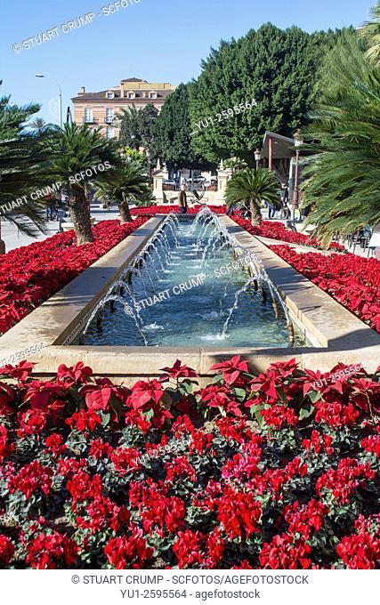 Poinsettia plants and water fountains in the Glorieta de Espana in Murcia Spain