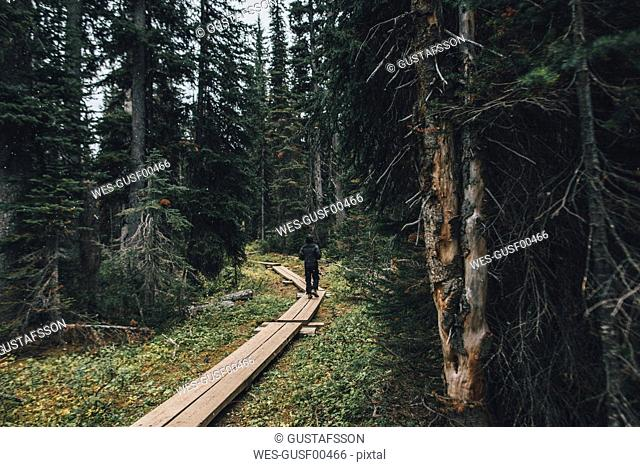 Canada, British Columbia, Yoho National Park, man hiking on boardwalk through forest