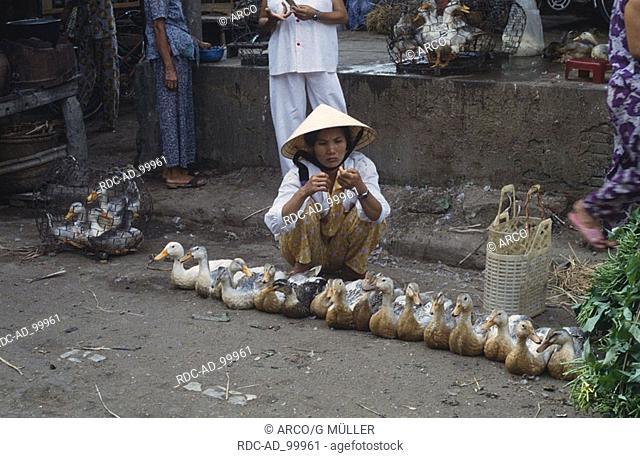 Woman selling ducks on market Hoi An Vietnam Frau verkauft Enten auf dem Markt Hoi An Vietnam Hausente Domestic Duck