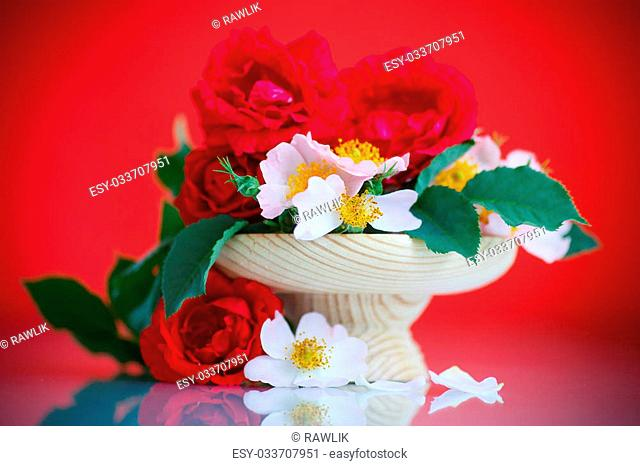 bouquet of beautiful wild roses on red background