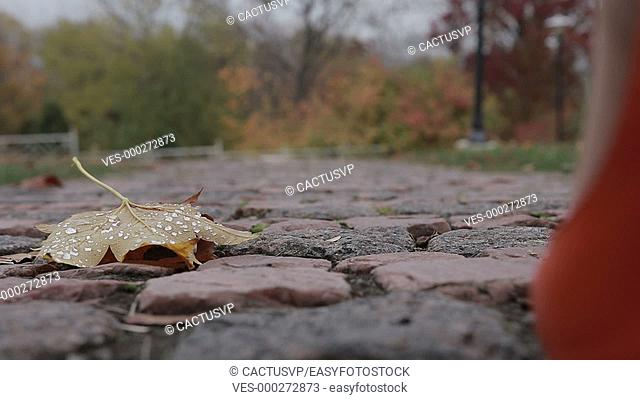 Elegant female legs walking away in autumn park