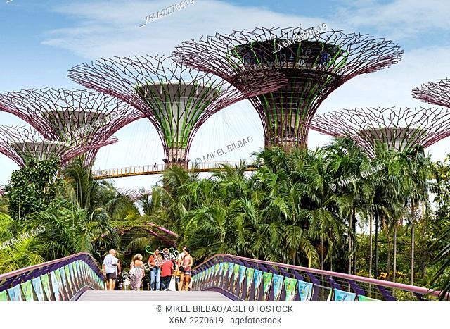 The Supertree Grove. Gardens by the Bay. Singapore, Asia