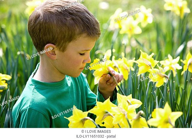 A young boy smelling a daffodil